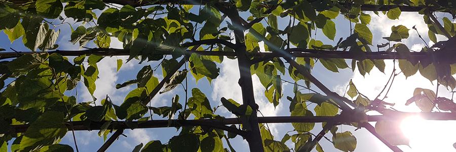 Beplantingsplan met bomen